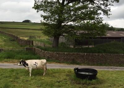 Butterfields-Existing-Farm-04